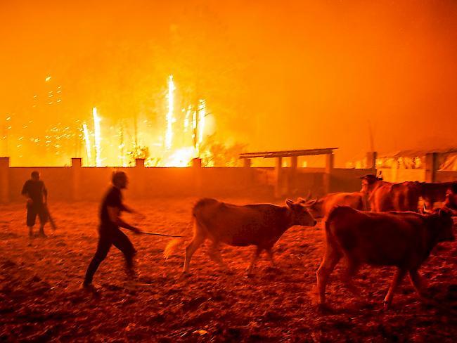 Fünf Tote bei Waldbränden in Spanien und Portugal